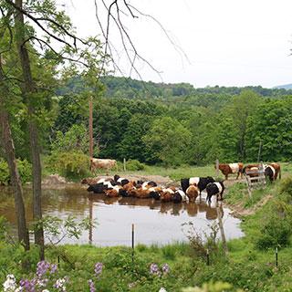 farm pictures